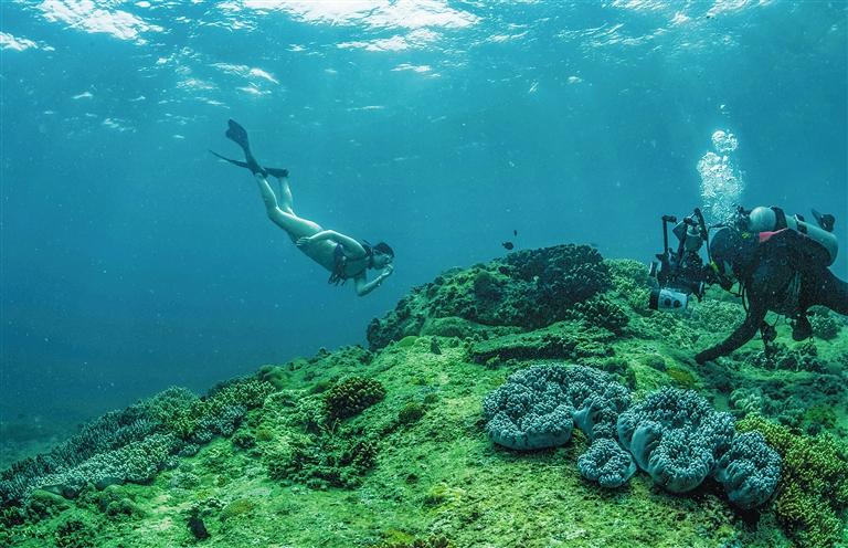 三亚蜈支洲岛附近海域的海底美景。 记者 武威 通讯员 韦尚婷 摄.jpg